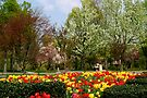 Spring In The Park by Gene Walls