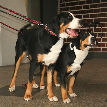 greater swiss mountain dog group by marasdaughter
