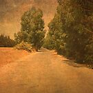 The Road to Korbous. by mariarty