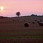 Harvest Sunset by Debbie Oppermann