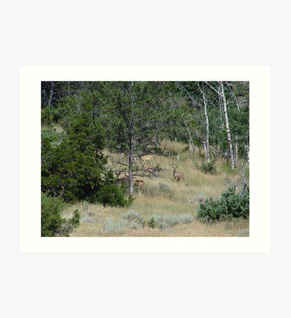 Five Bucks Art Print