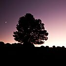 Twilight Silence by MagnusAgren