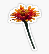 Orange Flower theUPgallery Sticker