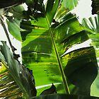 Banana tree by KesiaHosking