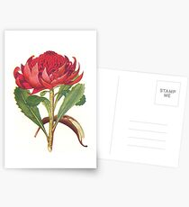 The Australian Flora in Applied Art - The Waratah (White) - Pillow Postcards