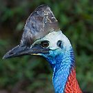Cassowary by Peter Pevy