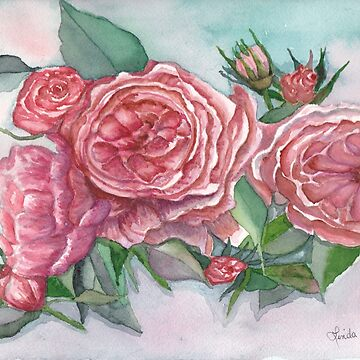 Cottage Roses Watercolor Print by Lallinda