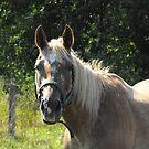 My Horsey Neighbours by Tracy Wazny
