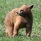 Black Bear Cub by Teresa Zieba