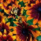 Rudbeckia - 'Autumn Colors' by T.J. Martin