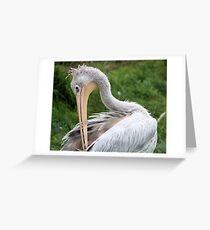 Preening Pelican Greeting Card