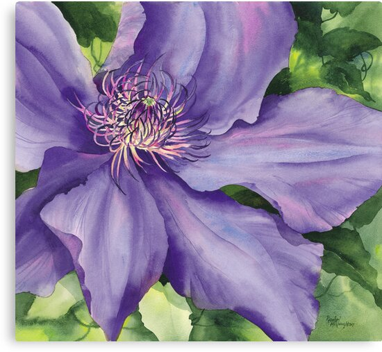 Clematis by artbyrachel