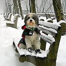 REALLY, REALLY... I LOVE SNOW! by elatan