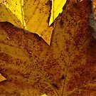 Autumn by David Lawrence
