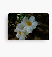 Papery Flowers Canvas Print