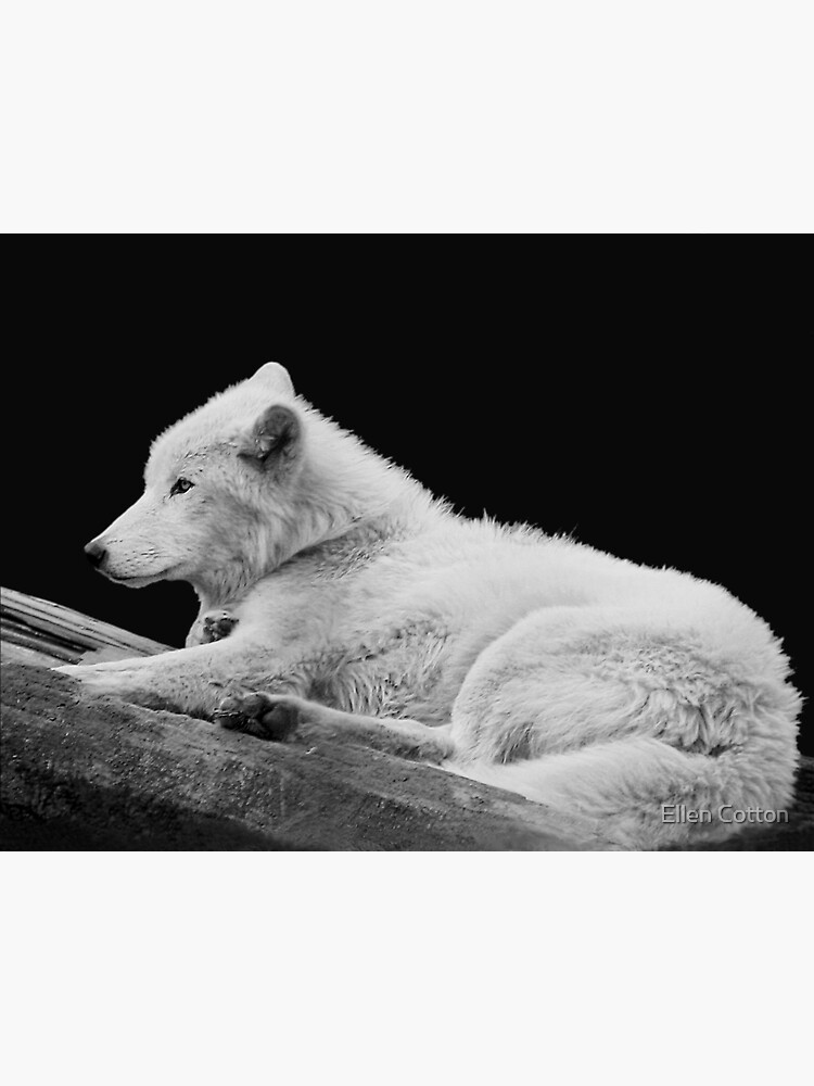 White Arctic Wolf by ellcot