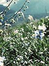 Glacier mountain flowers II by schizomania