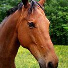 Beautiful Horse by MaluC