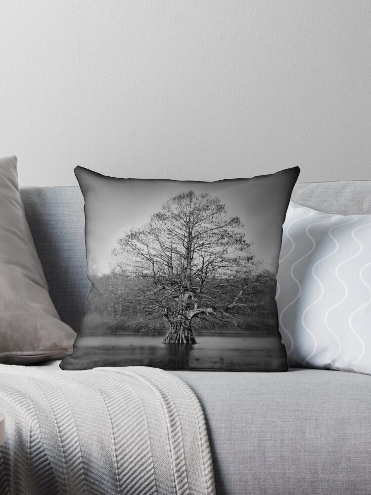 lone cyrpress by sroseo