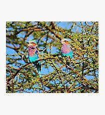 Samburu Birds Photographic Print