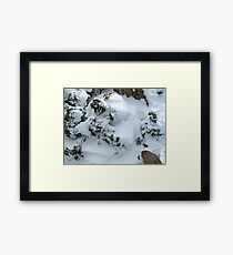 Patterns. Framed Print