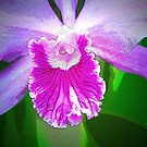 Heart of an Orchid by Terri~Lynn Bealle