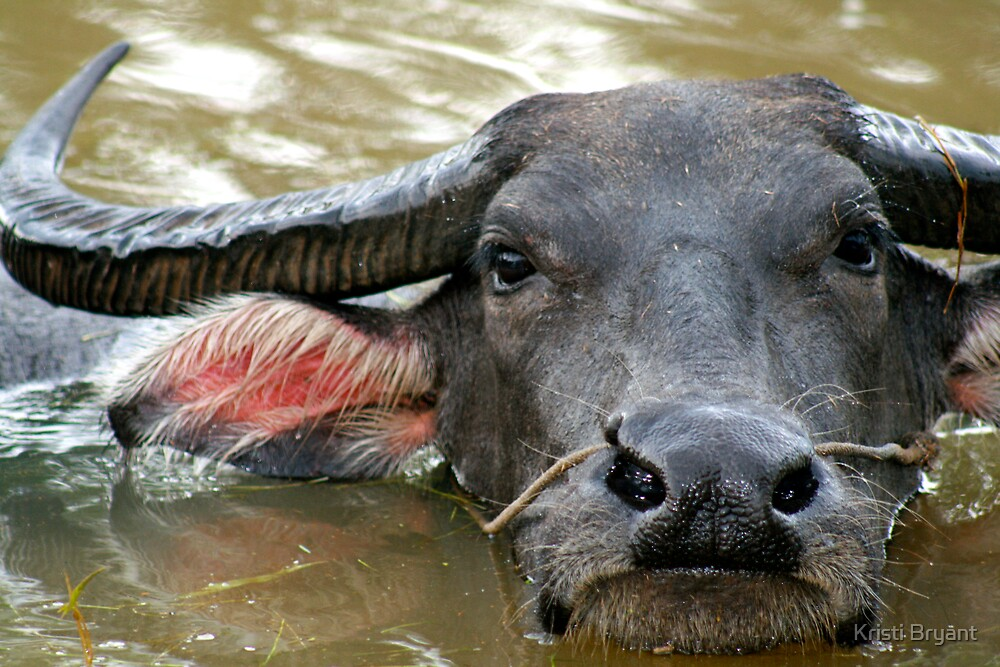 Buffalo by Kristi Bryant