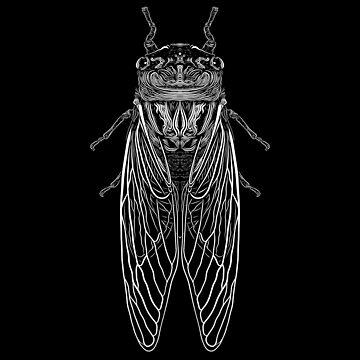 B&W Cicada by Rekanize