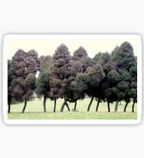 Trees walking in the park, photograph by Vic Potter Sticker