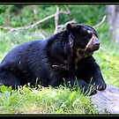 SPECTACLED BEAR by BOLLA67