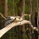 Darter On A Log by Jon Staniland