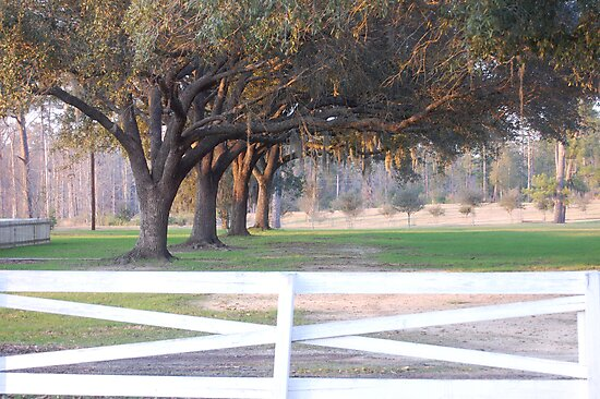 Tree row over the fence by jacksrf