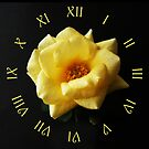 Yellow Rose On Black Yellow Script Roman Numbers Wall Clock by Alan Harman