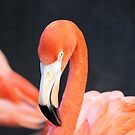 pink flamingo by Cheryl Dunning