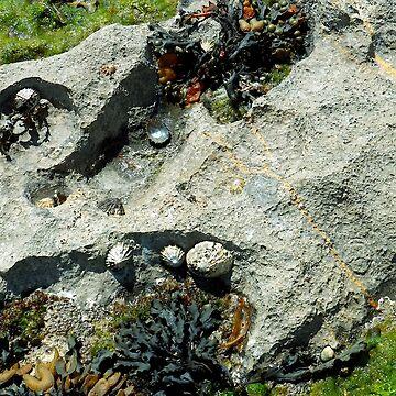 Seashells on Inishmore by Irish-Nostalgia