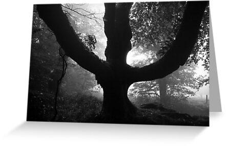 The Tree  by John Burtoft