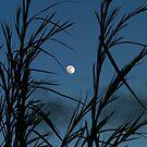 hawaiian moon tossing by Lisa Hildwine