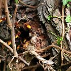 The hornet nest by missmoneypenny