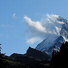 MOUNTAIN BEARD by mc27