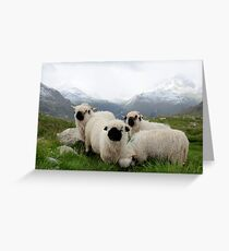 BLACK NOSE SHEEP Greeting Card