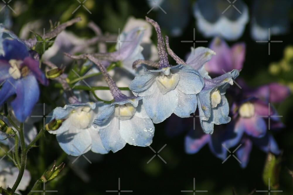Delphinium by Julie's Camera Creations <><