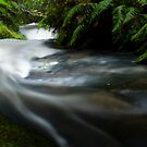 Small stream in the Tangarakau Gorge by Paul Mercer