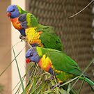 Colourful visitors just flew in.  by Rita Blom