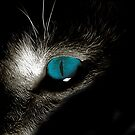Blue eyed devil by Raquel Perryman