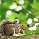 Mmm nut! by oddoutlet