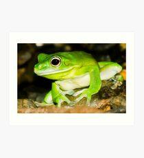 White lipped Tree Frog Art Print