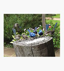 Bluey Feeding Frenzy Photographic Print