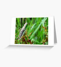 Tettigonia viridissima,  Grote groene sabelsprinkhaan Greeting Card
