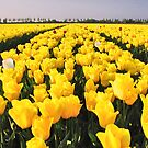 And the color is.......Yellow! by Adri  Padmos