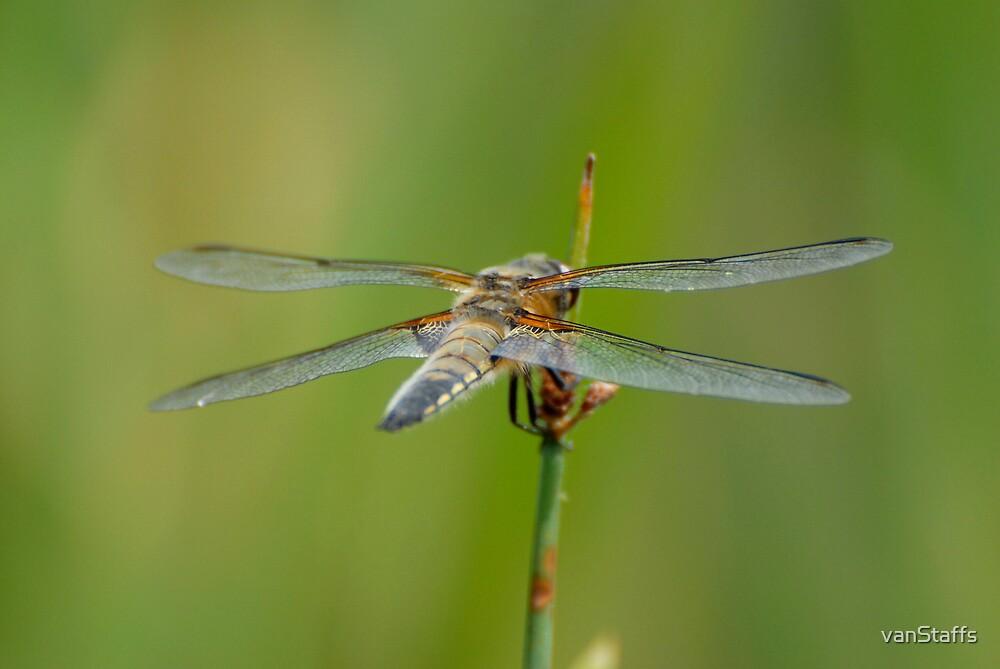 Wingspan by vanStaffs
